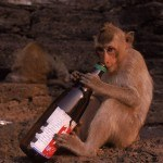 monkey-with-beer-bottle